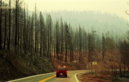 An emergency vehicle makes its way through a burned forest in the aftermath of the Wallow Fire in Alpine, Ariz., Friday, June 10, 2011.