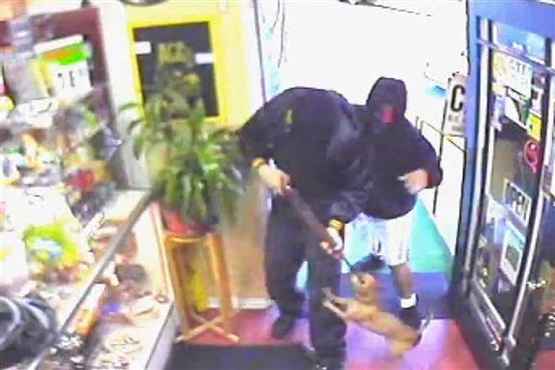 In a photo made from a surveillance video released by the Los Angeles County sheriff's office a chihuahua barks and jumps at a man holding a rifle during a robbery at a smoke shop in Altadena, Calif., on July 7, 2011,