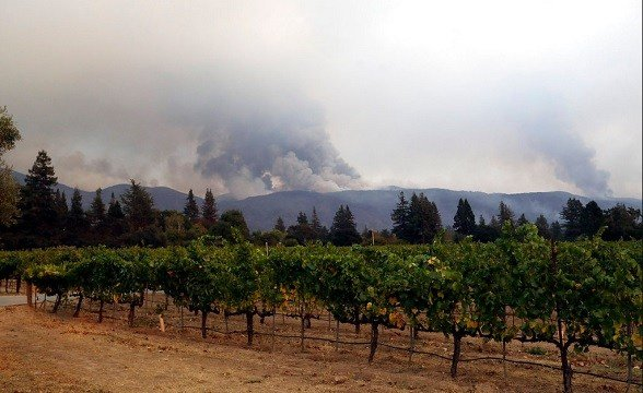 Vineyards are lined up as a wildfire burns on a mountaintop Monday, Oct. 9, 2017, in Napa, Calif.