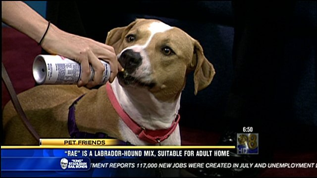 Rae loves her Cheese Whiz! This is a video screen grab showing Rae on the interview set in the News 8 studios Friday, August 5, 2011 for the Pet Friends segment.