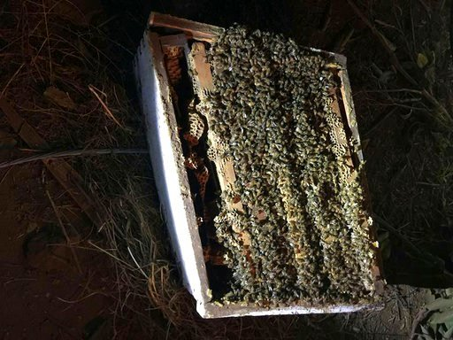 The bees were being transported from Montana to California's Central Valley to pollinate almond trees and were valued at $1 million or more. (Sgt. Tucker Huey/Auburn Police Department via AP)