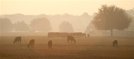 Smoke from a wildfire hangs over a field of cattle Sept. 7, 2011, in Bastrop, Texas. Wildfires have destroyed more than 600 homes and blackened about 45 square miles in and around Bastrop. (AP Photo/Eric Gay)