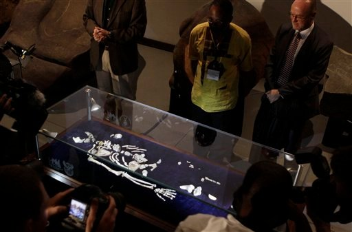 One of two sets of bones from Australopithecus Sediba, found in South Africa are unveiled at the University of the Witwatersrand in Johannesburg, Thursday, Sept. 8, 2011.