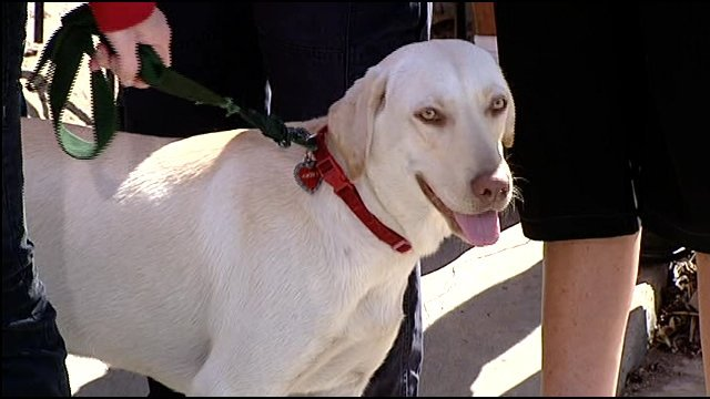 Carrie McGonigle's one-year-old yellow Labrador, named in her daughter's memory, tracked down Michelle Le's remains during the search.