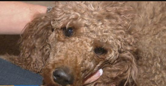 Clairemont Plane Crash: Charlee the dog found and reunited with her family