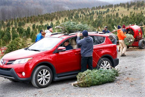 A worker at Grupp's Christmas Trees, center, ties one of the two trees that David Naugler bought to his car on Saturday, Dec. 2, 2017, in Harmony, Pa. The first weekend in December is traditionally a big sales day for holiday trees according to Jack Grupp