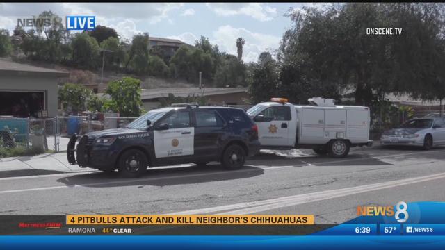 Pit bulls attack and kill neighbor's Chihuahuas in Lomita