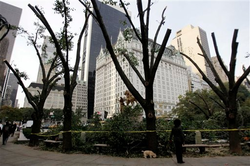 Trees that were damaged by a snowstorm, then trimmed, stand bare of branches at the edge of Central Park in New York, Monday, Oct. 31, 2011.