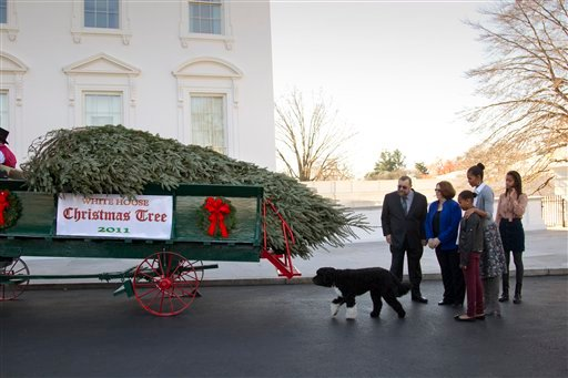 First Lady Michelle Obama and daughters Malia and Sasha watch as the White House Christmas tree arrives at the North Portico, Friday, in Washington, Nov. 25, 2011.