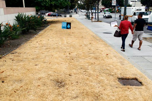 FILE - This Sept. 3, 2015, file photo shows a dried-out lawn at Los Angeles City Hall, with a sign explaining that irrigation has been shut off due to the ongoing drought.