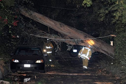 Los Angeles City firefighters look over a eucalyptus tree that fell on a house and knocked down power lines Nov. 30, 2011, in Beverly Hills, Calif. (AP Photo/Mark J. Terrill)