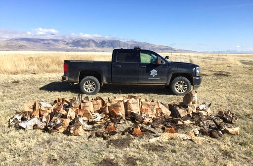 In this photo taken March 11, 2018 and released by the California Department of Fish and Wildlife are some of the over 140 carcasses they collected of mostly raptors, other birds and mammals near Standish, Calif.