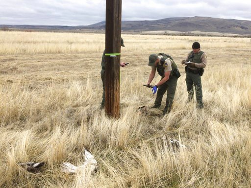 California Department of Fish and Wildlife managers believe the discovery near the rural town of Standish in Lassen County marks the largest poaching case involving raptors on record for California, agency spokesman Capt. Patrick Foy said. (California Dep