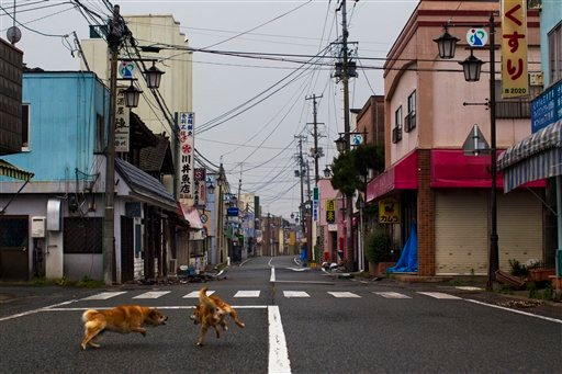 In this June 5, 2011 photo, two stray pet dogs fight in the deserted streets of Okuma, Japan. (AP Photo/AP Photographer David Guttenfelder on assignment for National Geographic Magazine)