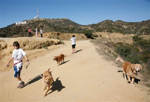 A hiker walks her dogs in Griffith Park near the Hollywood sign after a plastic bag containing a human head was discovered Tuesday by two women walking their dogs on a nearby trail off Canyon Drive in Los Angeles, Jan. 18, 2012. (AP Photo/Jason Redmond)