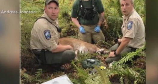 Cougar kills cyclist as his injured pal raises alarm