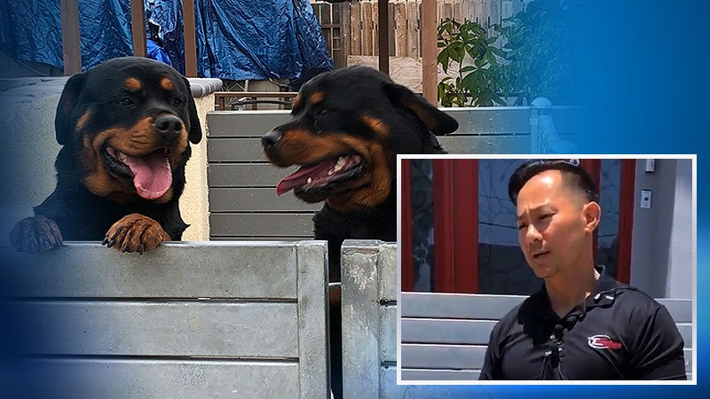 Image shows Nathan Le and his two Rottweilers.