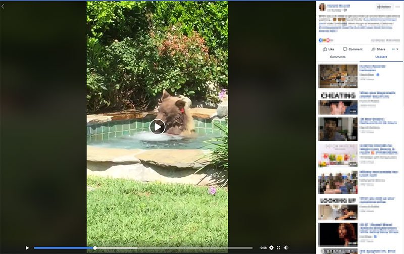 Margarita-loving bear relaxes in California hot tub