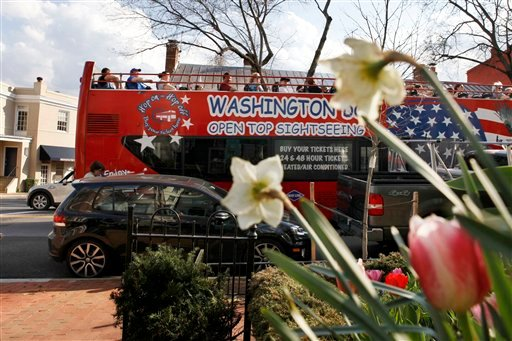 Passing blooming flowers, a packed open top tourist bus drives through the Georgetown neighborhood of Washington, Tuesday, March 13, 2012. (AP Photo/Jacquelyn Martin)