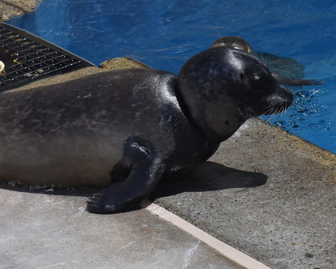 Photo provided courtesy of SeaWorld San Diego