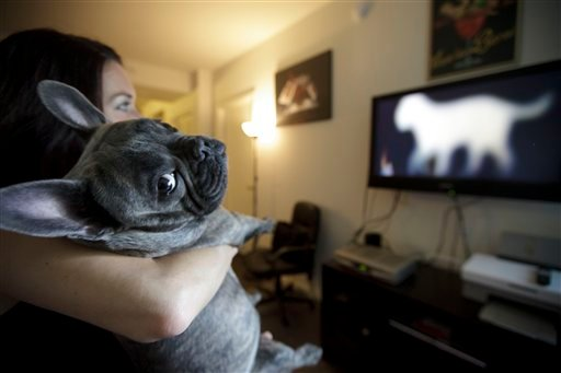 In this April 7, 2012 picture, Bleu, a French bulldog owned by Maria Catania, left, watches DogTV in her apartment in San Diego.