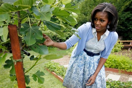First lady Michelle Obama points out a fig tree as she talks about the White House Kitchen Garden during an interview with The Associated Press, Tuesday, June 5, 2012, on the South Lawn of the White House in Washington. (AP Photo/Charles Dharapak)