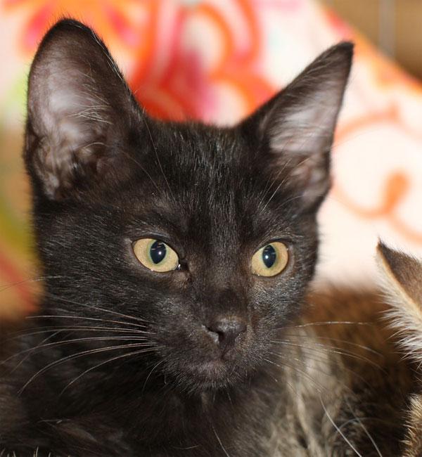 Darlin': Black kitty