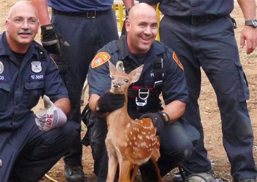 In this image released by the Suffolk County Police Department, Thursday, Aug. 2, 2012, officers pose for a photo with a young deer before releasing it in Mount Sinai, N.Y.  (AP Photo/Suffolk County Police Department)