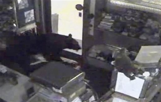 This image provided by Rocky Mountain Chocolate Factory taken from surveillance video shows a bear leaving the Rocky Mountain Chocolate Factory store in Estes Park, Colo., on July 25, 2012. (AP Photo/Rocky Mountain Chocolate Factory)