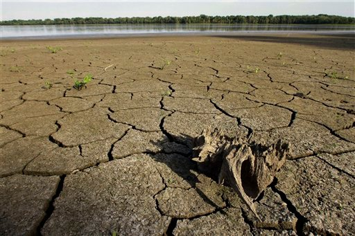 In this Aug. 22, 2012, drought condition water levels have taken their toll on the wildlife at Anderson Lake State Fish & wildlife Area near Astoria, Ill. (AP Photo/Seth Perlman)