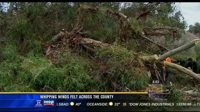 Tuesday, December 18, the winds managed to bring down some trees around the county, including eucalyptus trees.