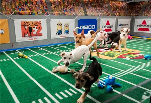 "This undated publicity photo provided by Animal Planet shows dogs playing on the field during ""Puppy Bowl IX,"" in New York. (AP Photo/Animal Planet, Keith Barraclough)"