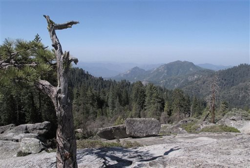 In parts of California's Sierra Nevada, the incursion of trees is sucking marshy meadows dry. Glaciers are melting into mere ice fields. Wildflowers are blooming earlier.