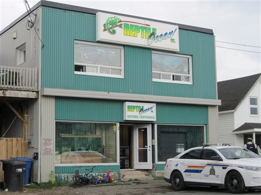 In this Monday Aug. 5, 2013 photo, Royal Canadian Mounted Police work at the scene of a fatal python attack at Reptile Ocean exotic pet store in Campbellton, New Brunswick.