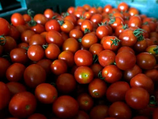 Fresh cherry tomatoes are stored in a barn at Denison Farm on Monday, Aug. 12, 2013, in Schaghticoke, N.Y. (AP Photo/Mike Groll)