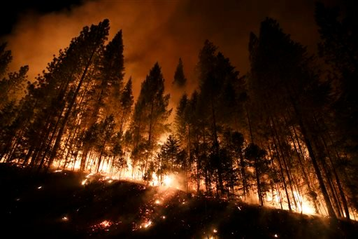 Fire crews are clearing brush and setting sprinklers to protect two groves of giant sequoias as a massive week-old wildfire rages along the remote northwest edge of Yosemite National Park. (AP Photo/Jae C. Hong)