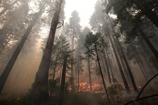The Rim Fire burns through trees near Yosemite National Park, Calif., on Tuesday, Aug. 27, 2013. Firefighters gained some ground Tuesday against the huge wildfire burning forest lands in the western Sierra Nevada, including parts of Yosemite National Park
