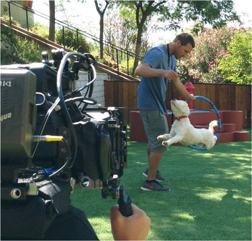 "In this Aug. 14, 2013 photo, Animal expert Brandon Mcmillan, host and animal trainer of the show ""Lucky Dog"" trains Willie, a Tibetan Terrier McMillan rescued rescued from a Los Angeles County shelter. (AP Photo/Bryan Curb, CBS Entertainment)"