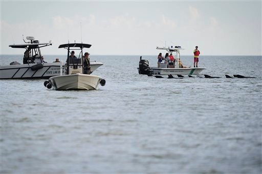 Park Rangers and Law Enforcement patrol the waters to ensure safe passage for a pod of pilot whales, Wednesday, Dec. 4, 2013 at Highland Beach in The Everglades of Florida. (AP)