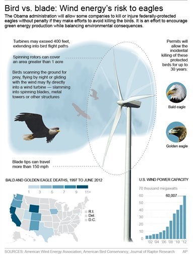 Graphic shows how birds are harmed by wind turbines.