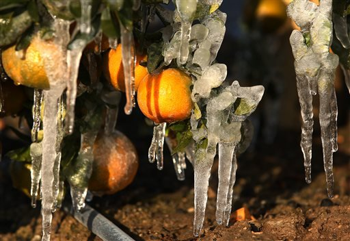 Frozen tangerines are shown with misters running to avoid as much damage as possible during a cold snap that is affecting the San Joaquin Valley citrus crop Friday, Dec. 6, 2013 in Orange Cove, Calif. (AP)
