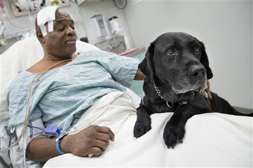 Cecil Williams pets his guide dog Orlando in his hospital bed following a fall onto subway tracks from the platform at 145th Street, Tuesday, Dec. 17, 2013, in New York. (AP Photo/John Minchillo)