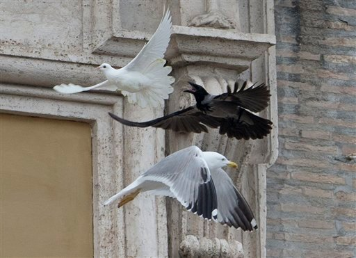 A dove which was freed by children flanked by Pope Francis during the Angelus prayer, is chased by a black crow in St. Peter's Square, at the Vatican, Sunday, Jan. 26, 2014.
