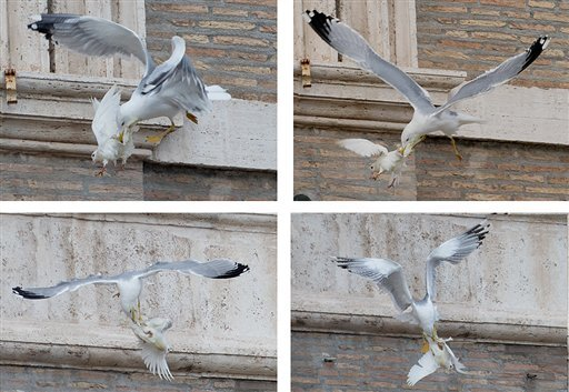 FOUR PICTURES COMBO - A dove which was freed by children flanked by Pope Francis during the Angelus prayer, is attacked by a seagull in St. Peter's Square, at the Vatican, Sunday, Jan. 26, 2014.