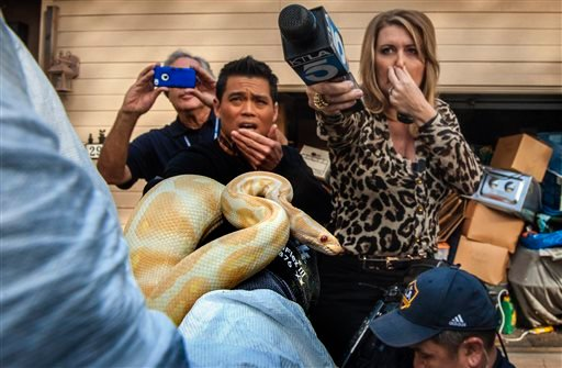 While interviewing Sondra Berg, Santa Ana Police Animal Services supervisor, television reporters Bobby DeCastro, from FOX11, and Wendy Burch, of KTLA 5 plug their noses to avoid the stench emanating from the house with of dead and decaying snakes. (AP)