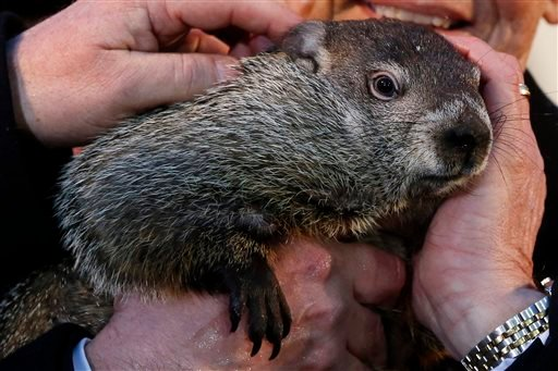 Punxsutawney Phil is held by Ron Ploucha after emerging from his burrow Sunday, Feb. 2, 2014, on Gobblers Knob in Punxsutawney, Pa., to see his shadow and forecast six more weeks of winter weather.