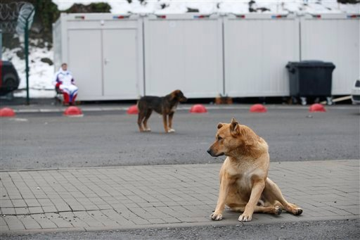 Stray dogs sit outside the Rosa Khutor Extreme Park course, a venue for the snowboarding and freestyle competitions of the 2014 Winter Olympics, in Sochi, Russia, Monday, Feb. 3 2014.
