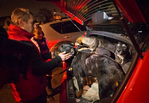 Stray dogs brought out of Sochi by activist Yulia Krasova, second from left, wait to be transferred to the car of fellow activist Igor Airapetian, left, at a rendezvous point 120 kilometers away from the Olympic area in the early morning hours of Tuesday.