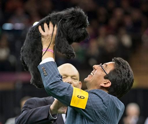 FILE - In this Feb. 12, 2013 file photo, Ernesto Lara celebrates with Banana Joe, an affenpinscher, who won Best in Show, during the 137th Westminster Kennel Club dog show at Madison Square Garden in New York. (AP)