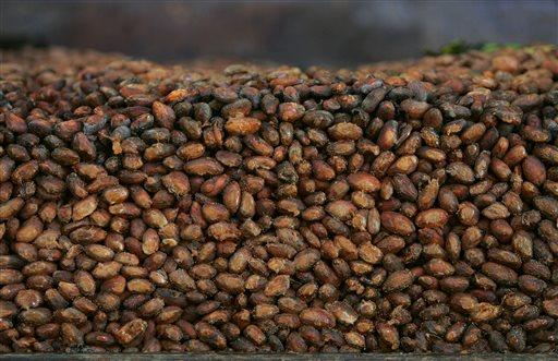 This Thursday, Nov. 24, 2005 file photo shows organic cocoa beans in storage at a factory in Ocumare de la Costa, 100 kilometers (60 miles) west of Caracas, Venezuela.